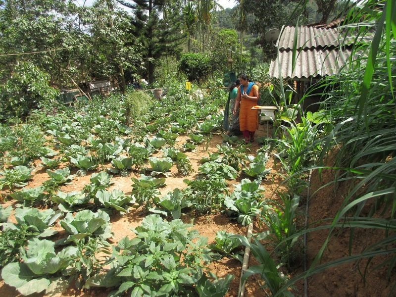 Agriculture farm (Image Credit - Google)