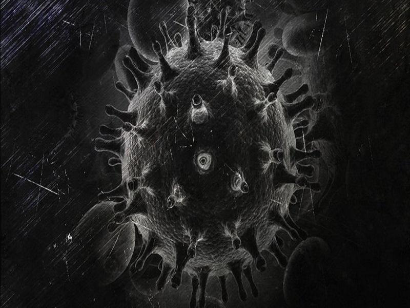 Black Fungus (Image Credit - Google)