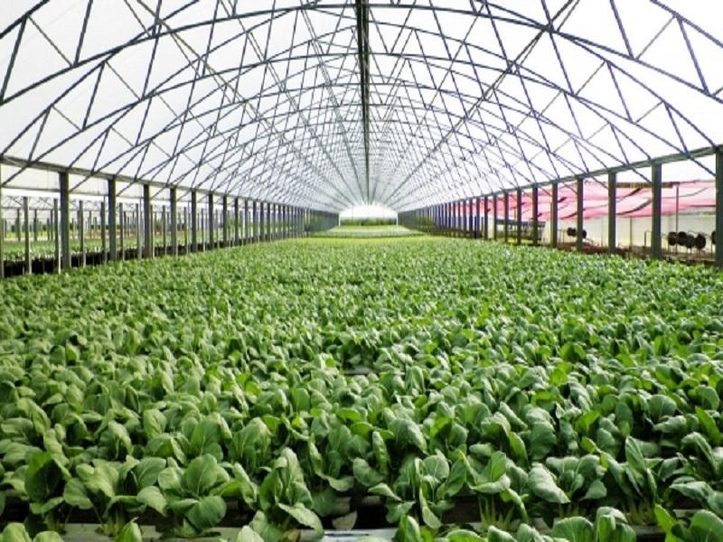 Green house (Image Credit - Google)