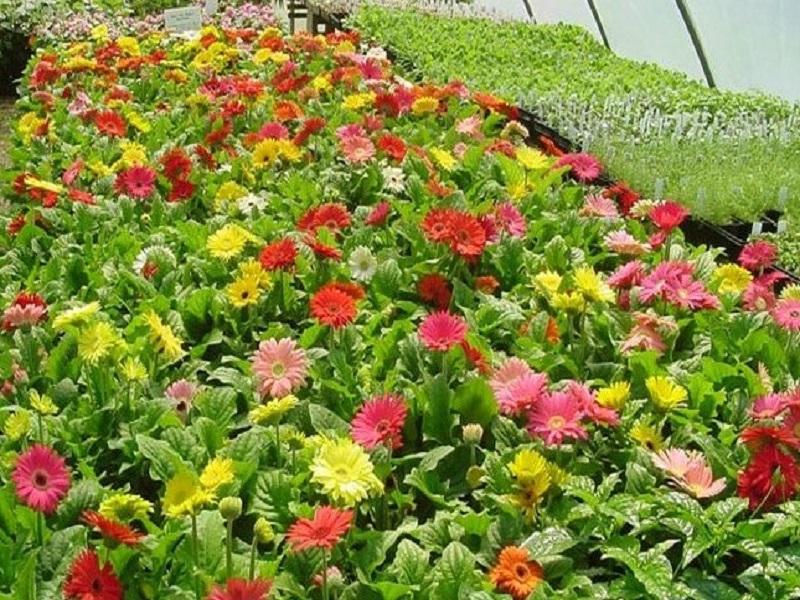 Floriculture (Image Credit - Google)