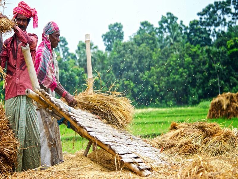 Aus paddy (Image Credit - Google)