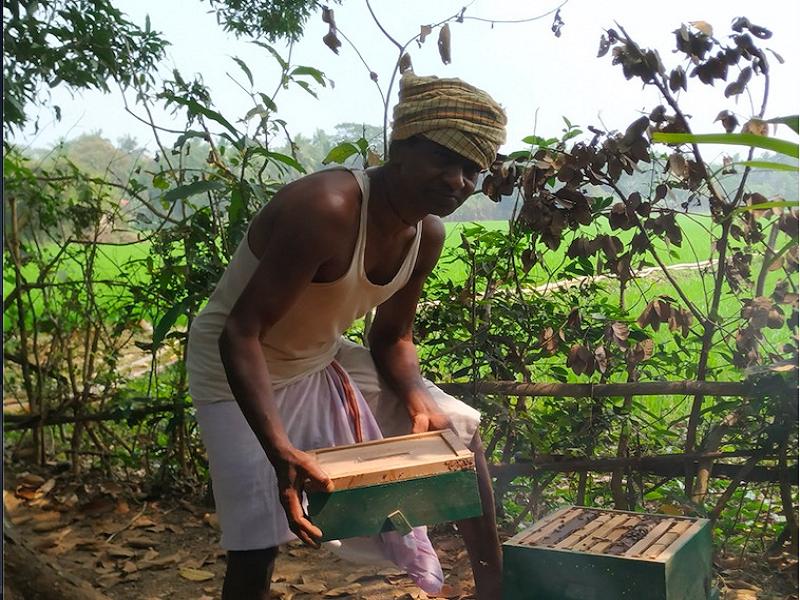 Honey Bee farming (Image Credit - Google)