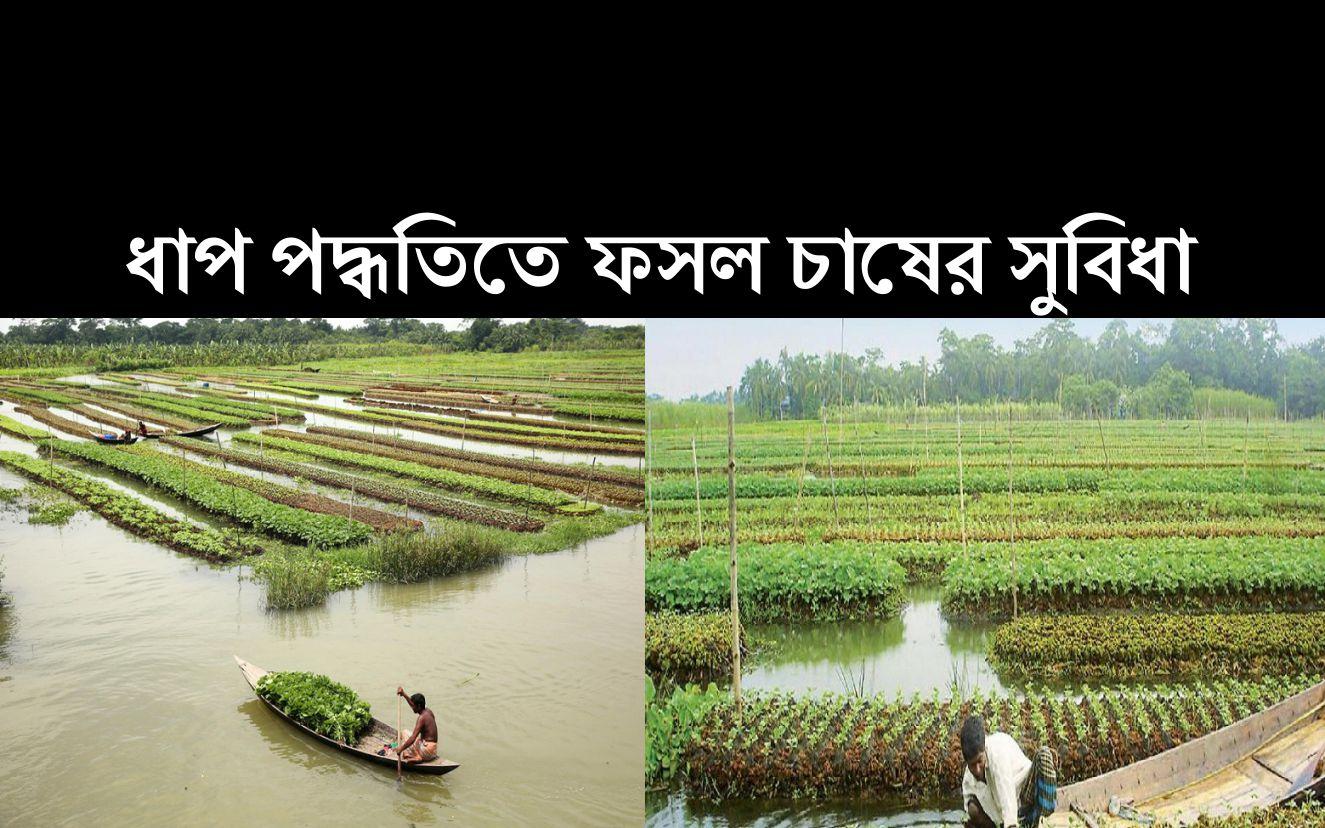 Floating Agricultural System: বর্ষায় ভাসমান ধাপ পদ্ধতিতে ফসল উৎপাদনের অভিনব কৌশল