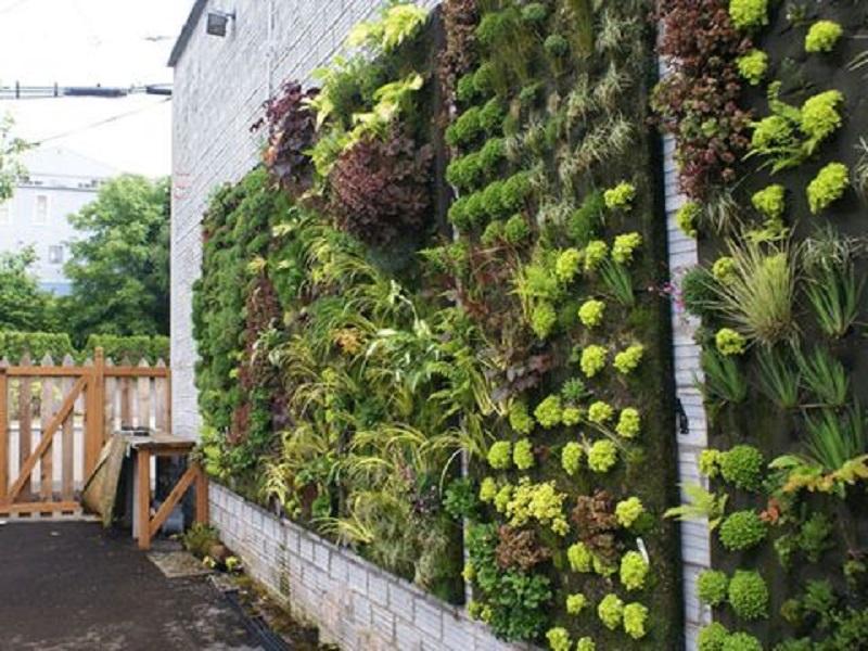 Vertical gardening (Image Credit - Google)