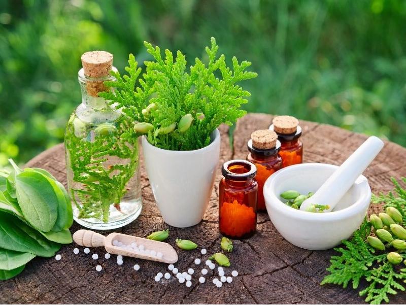 Medicinal herb (Image Credit - Google)