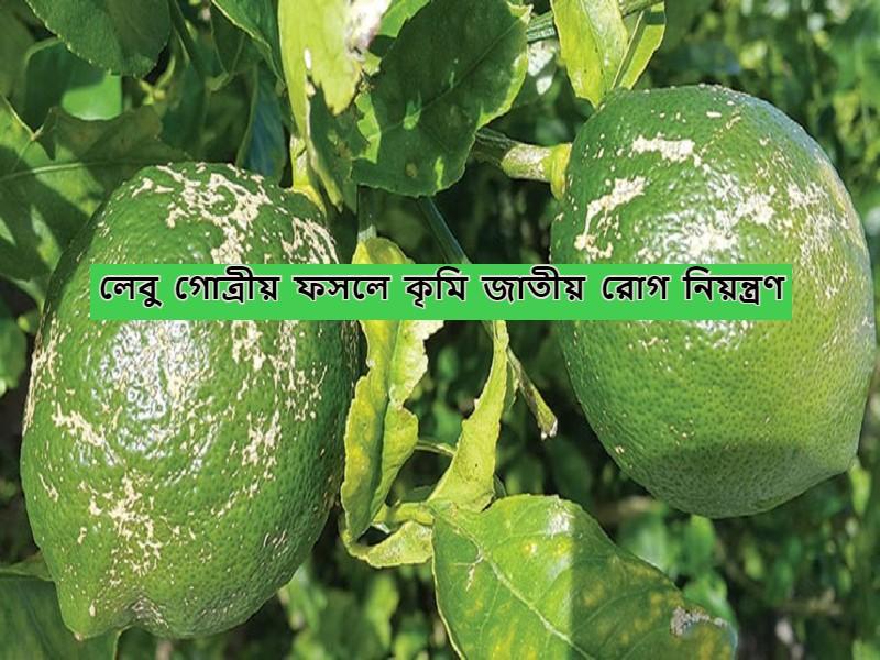 Citrus Crop - লেবু গোত্রীয় ফসলে কৃমি জাতীয় রোগ নিয়ন্ত্রণ-এর সহজ উপায়