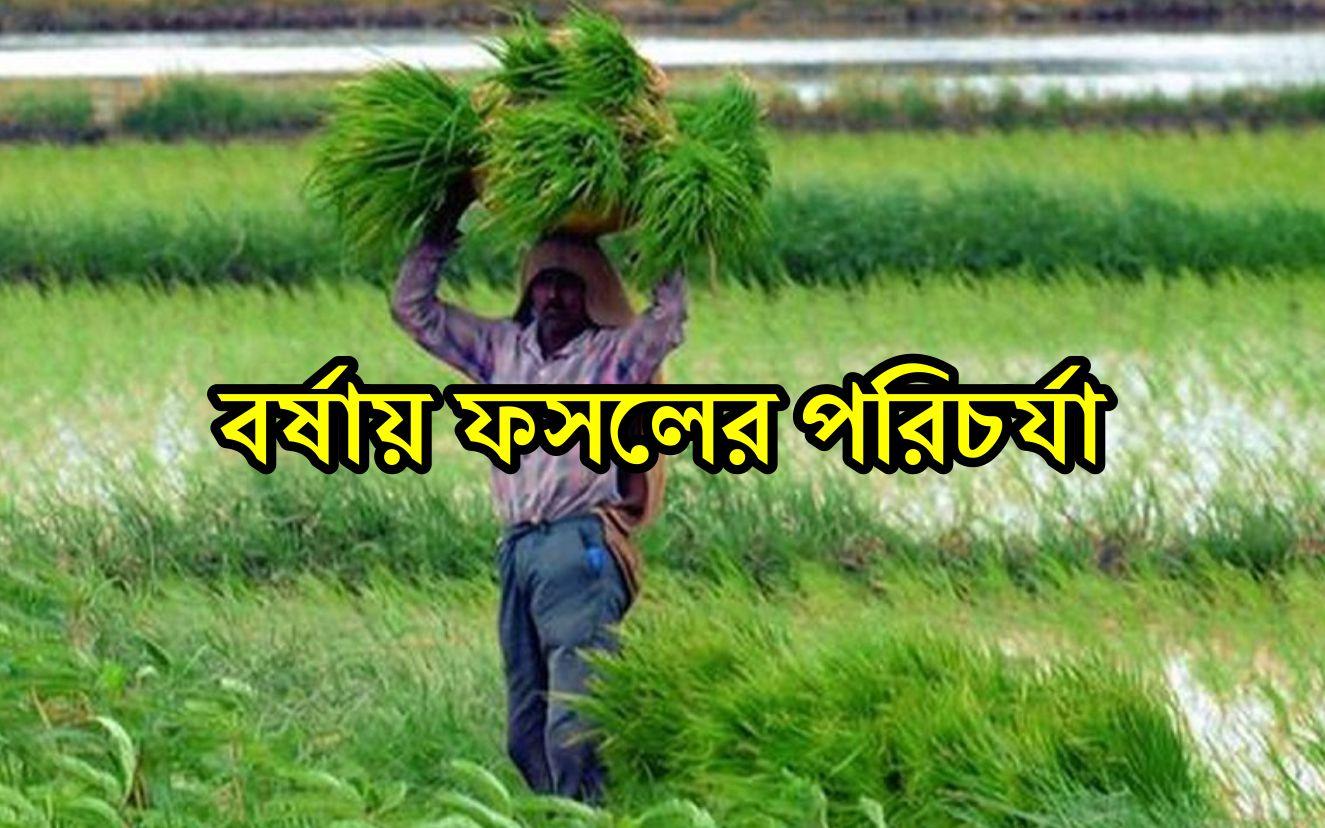 Monsoon Crop Care: কিভাবে বর্ষায় ফসলের যত্ন নেবেন?