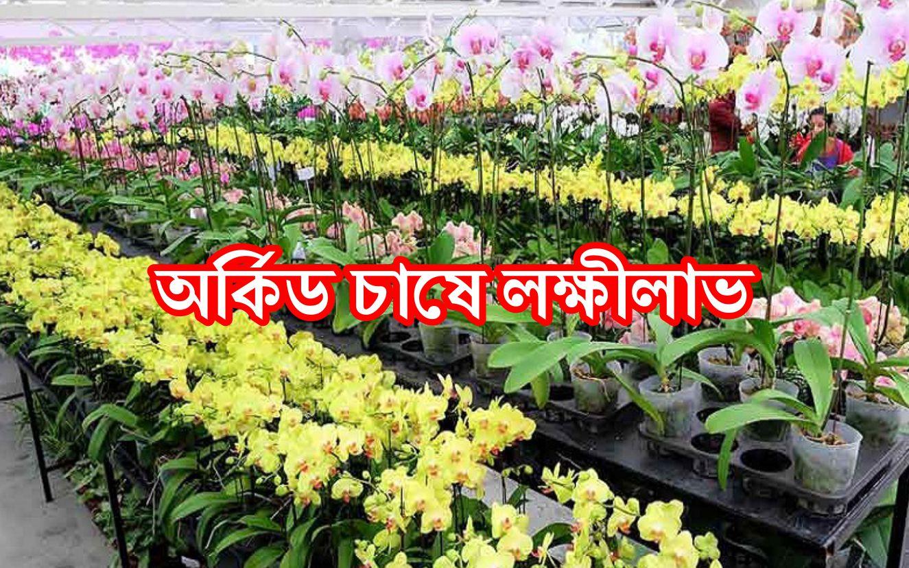 Orchid Farming: জেনে নিন অর্কিড ফুল চাষ পদ্ধতি ও রোগদমন ব্যবস্থা