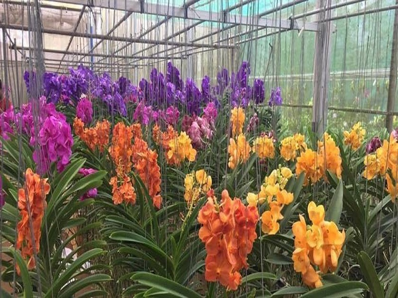 Orchid (Image Credit - Google)