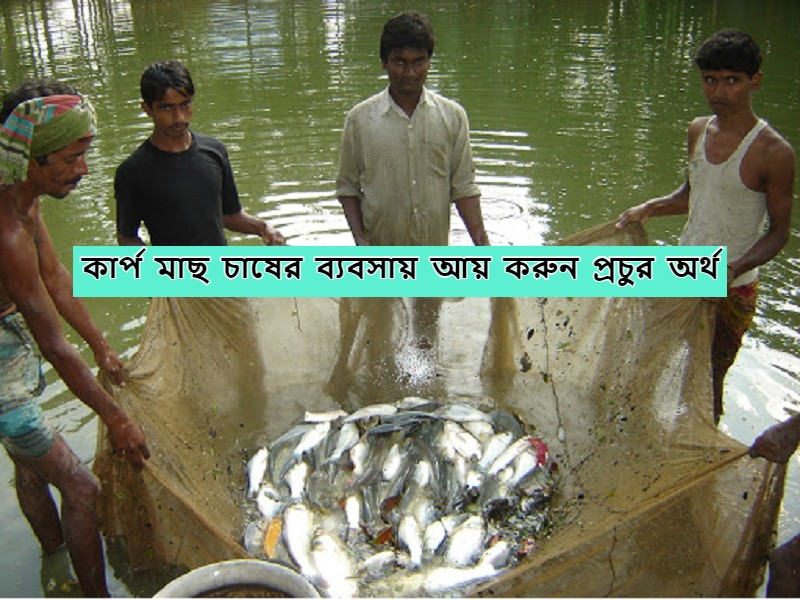 Fish farming - মাছ চাষ করে গ্রামীণ বেকার যুবকরা আয় করতে পারেন অতিরিক্ত অর্থ