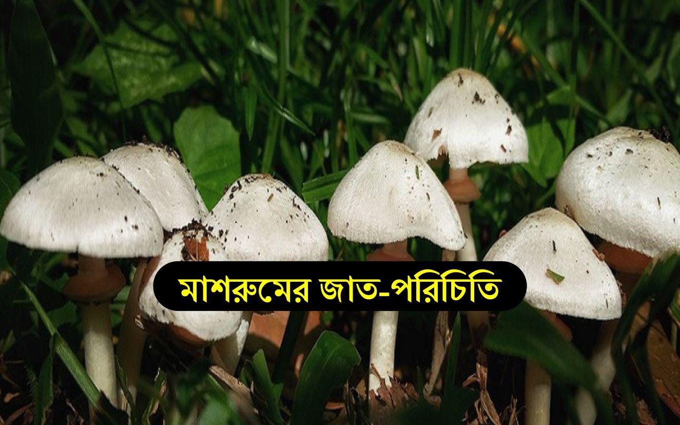 Mushroom variety: জেনে নিন মাশরুমের চাষযোগ্য জাতের পরিচয় ও চাষ পদ্ধতি