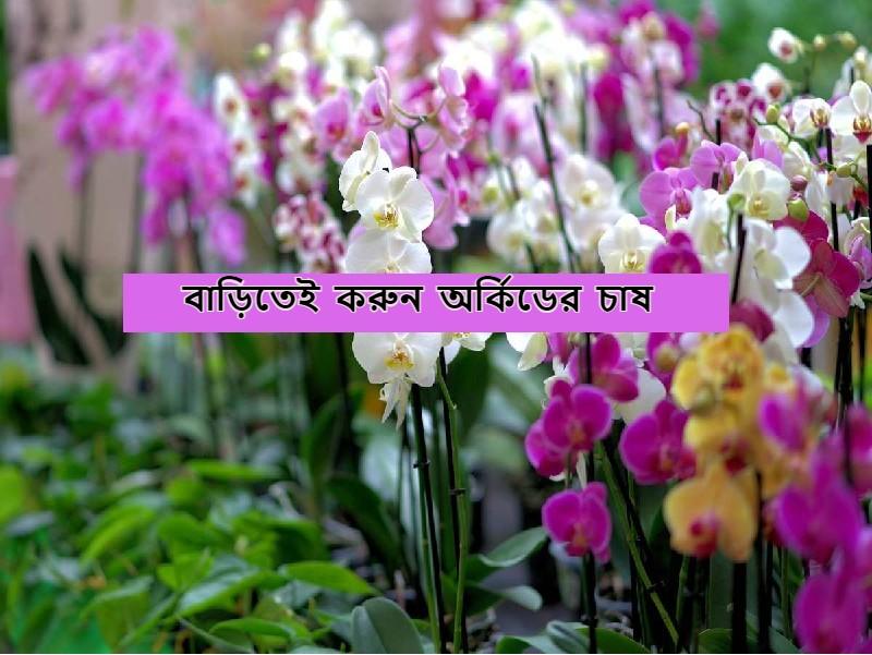 Orchid Farming: আধুনিক পদ্ধতিতে উপযুক্ত পরিচর্যার মাধ্যমে অর্কিডের চাষ