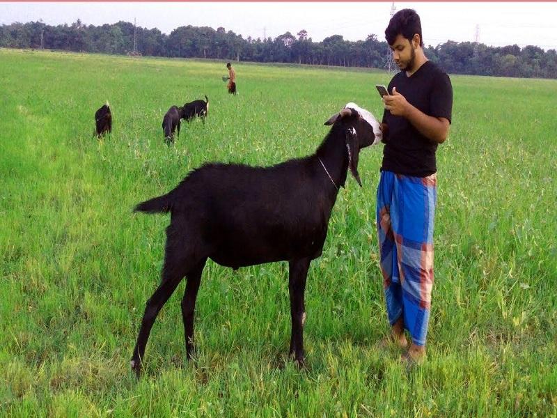 Black Bengal (Image Credit - Google)