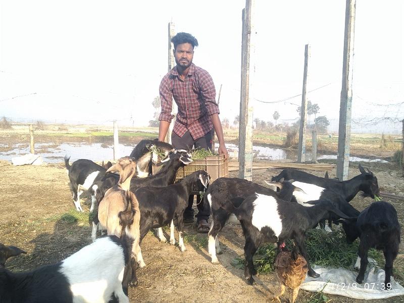 Goat Farm (Image Credit -Google)