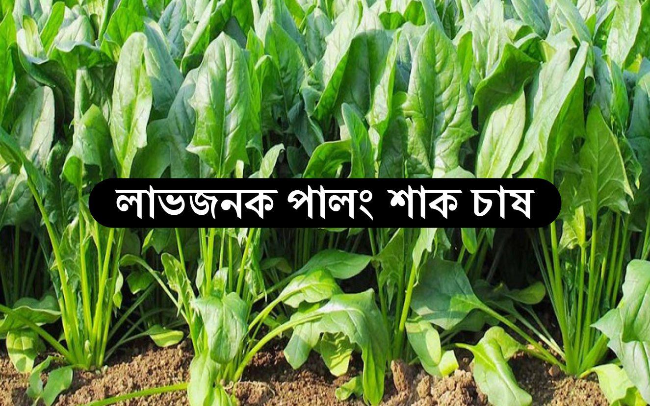 Palang Farming: জেনে  নিন পুষ্টিকর পালং শাক চাষ পদ্ধতি