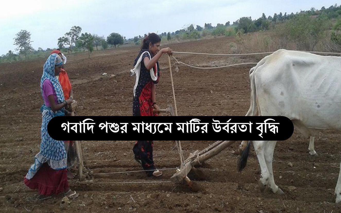 Organic Farming: গবাদি পশুর জৈবিক কার্যাবলী মাটিকে উর্বর করে তোলে