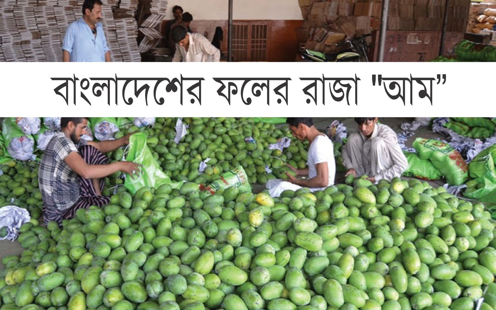 "Mango Farming: আম উৎপাদনে বিশ্বে শীর্ষ দশে ""বাংলাদেশ"""