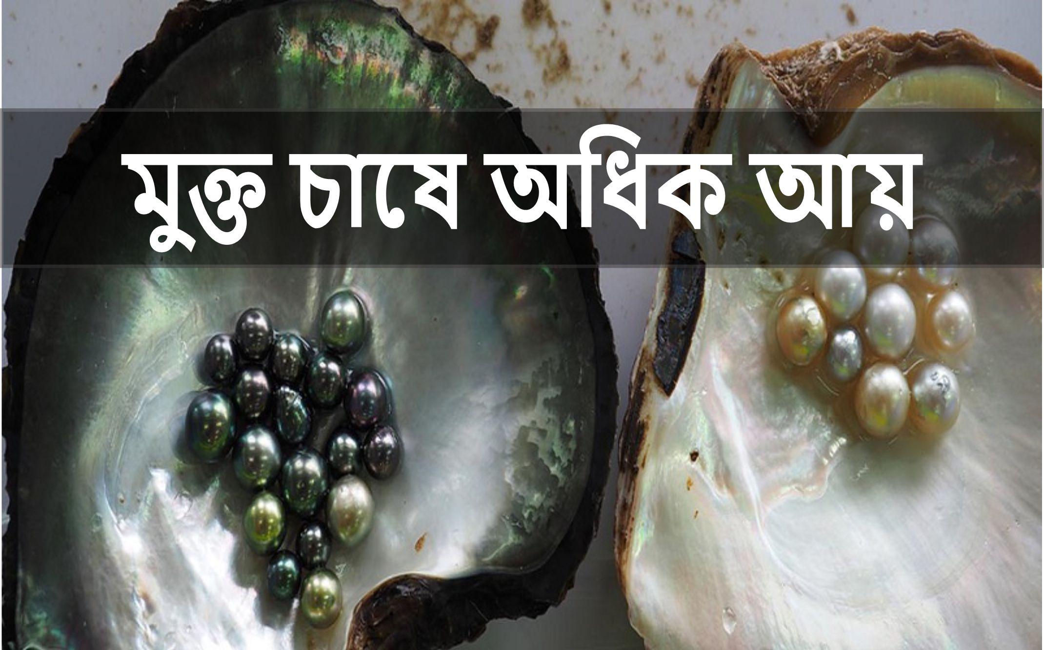 Pearl Farming Guidance: জেনে নিন মুক্ত চাষের সম্পূর্ণ পদ্ধতি