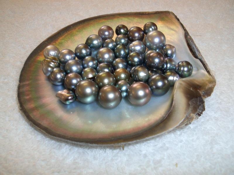 Pearl (Image Credit - Google)