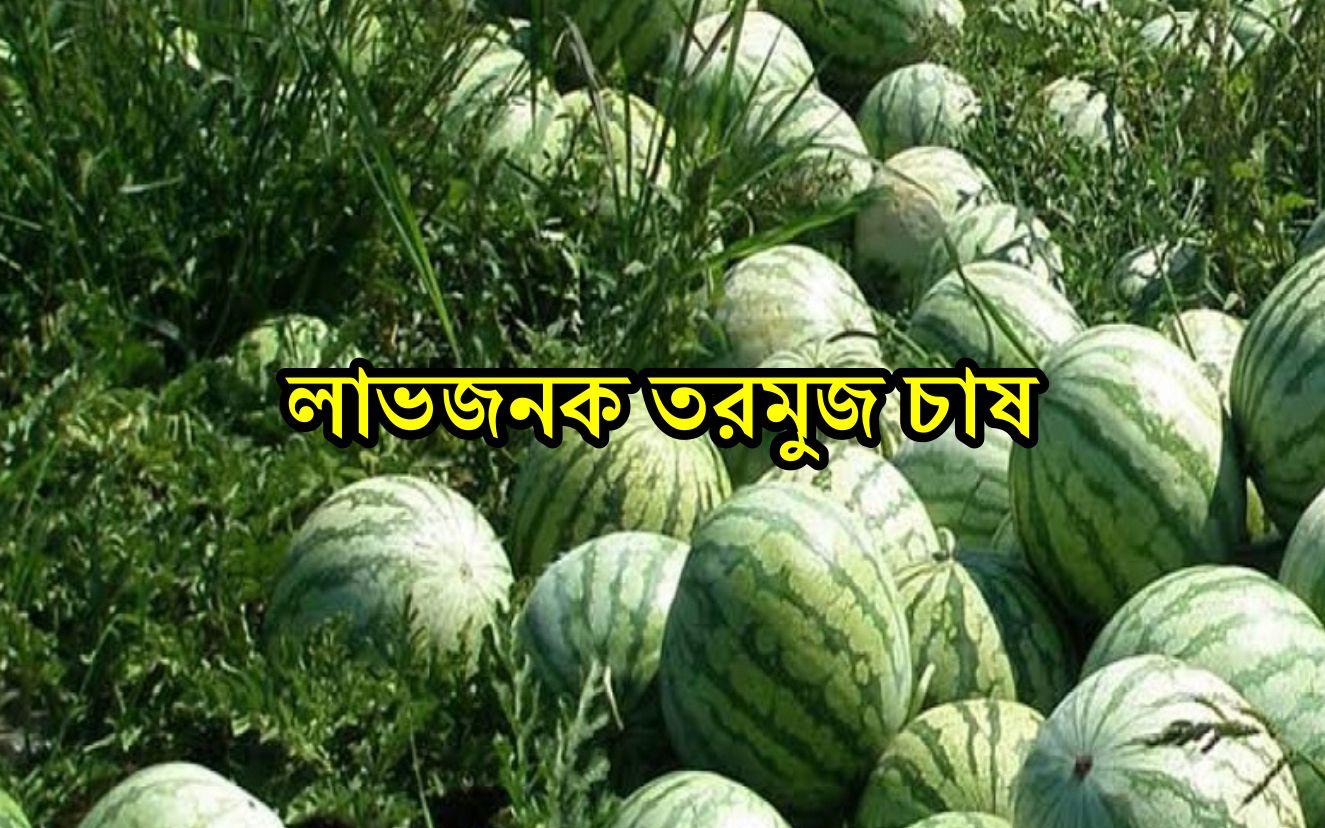 Watermelon Farming: জেনে নিন  তরমুজ চাষ পদ্ধতি ও সঠিক উপায়ে পরিচর্যা