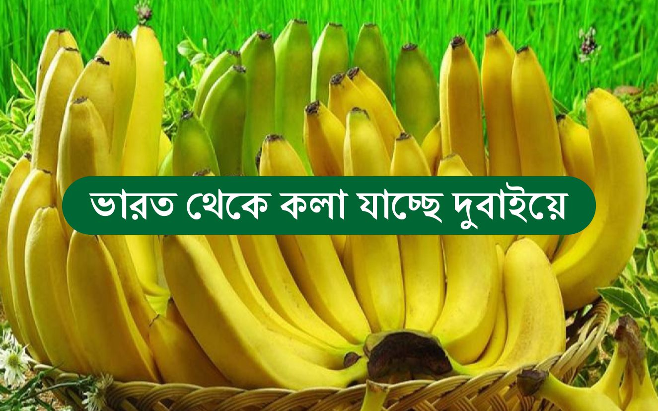 GI Certified Jalgaon Bananas: ভারত থেকে GI স্বীকৃত  জলগাঁও কলা রপ্তানি হচ্ছে দুবাইয়ে