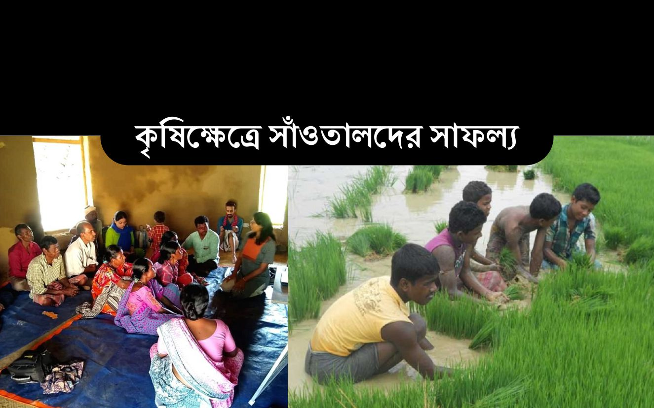 Santal farmers of Bengal: বাংলার সাঁওতাল উপজাতিরা ফের ঘুরে দাঁড়াচ্ছে কৃষিক্ষেত্রে