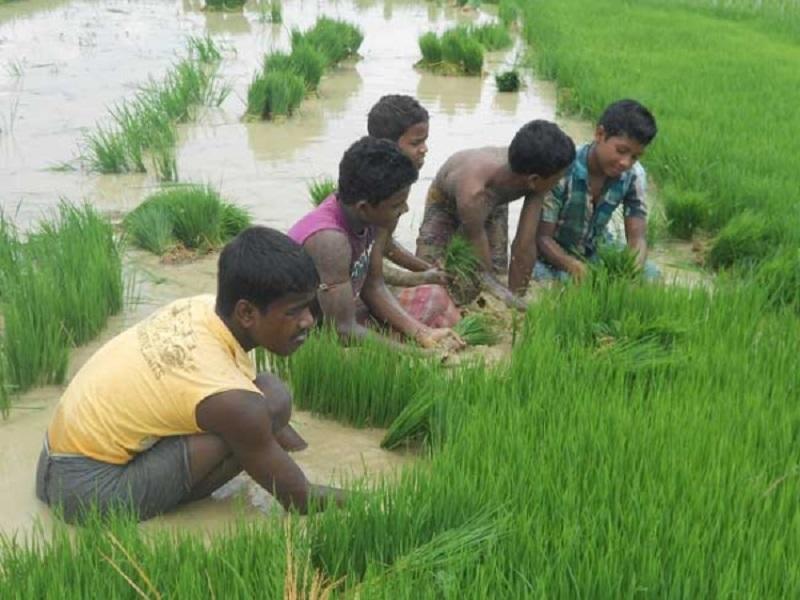 Santal farmers (Image Credit - Google)
