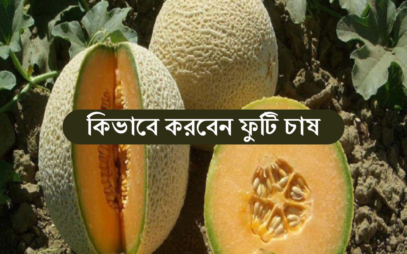 Melon Farming: জেনে নিন সহজ উপায়ে মেলন বা ফুটি চাষ পদ্ধতি