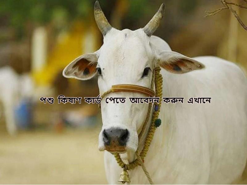 Pashu Kisan Credit Card - কীভাবে আবেদন করবেন পশু কিষাণ কার্ডের জন্য, জানুন সম্পূর্ণ পদ্ধতি
