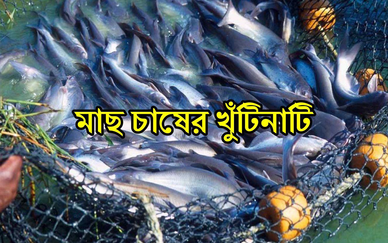 Fish Farming:  জেনে নিন মাছ চাষের উন্নত পদ্ধতি ও প্রয়োজনীয় তথ্য