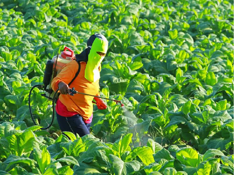 Bio Pesticide application (Image Credit - Google)