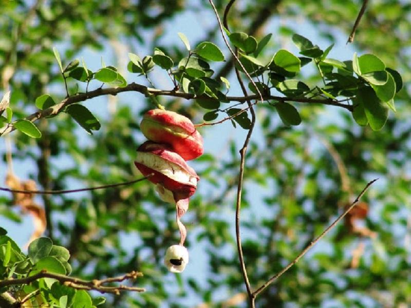 Jungle Jalebi (Image Credit - Google)