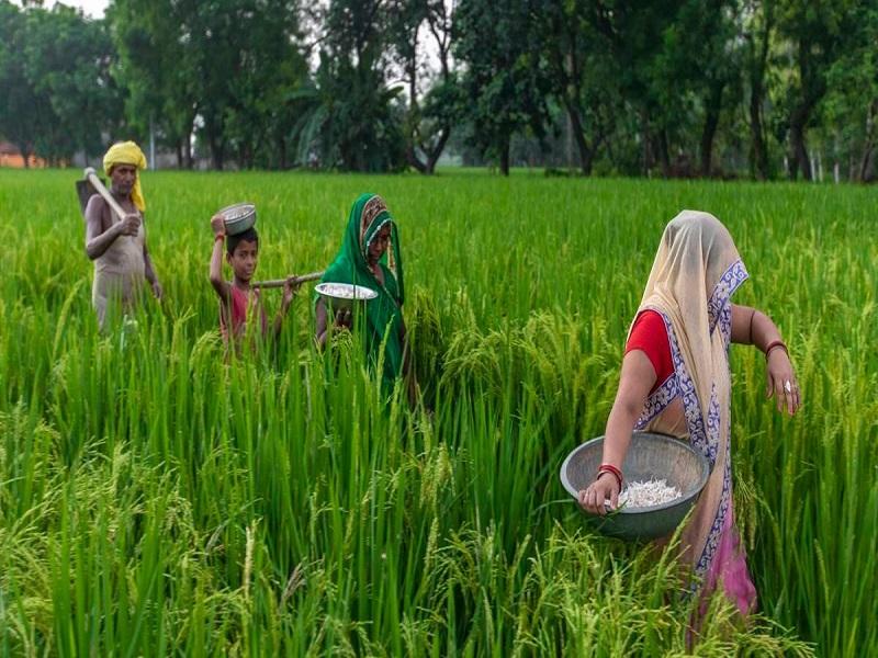 Women farmer (image credit- Google)