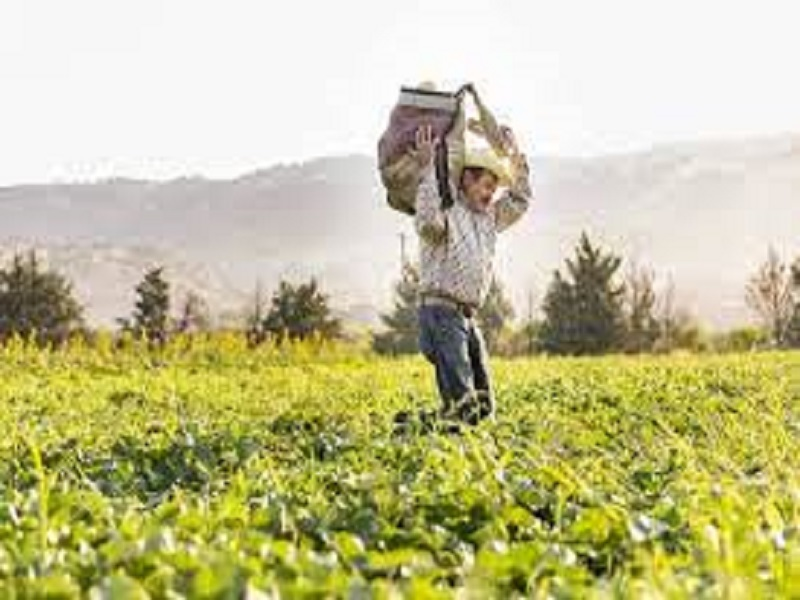 Organic Farming (image credit- Google)