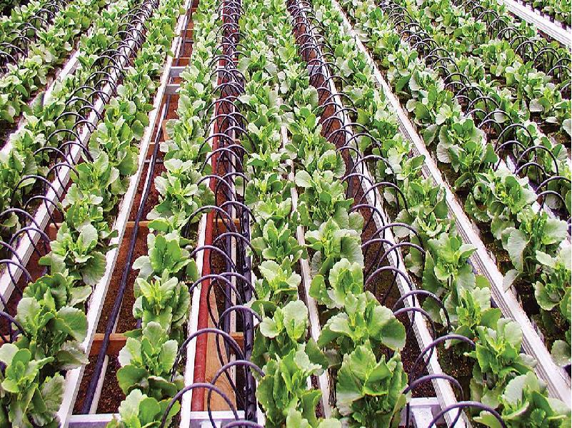 Drip Irrigation (Image Credit - Google)