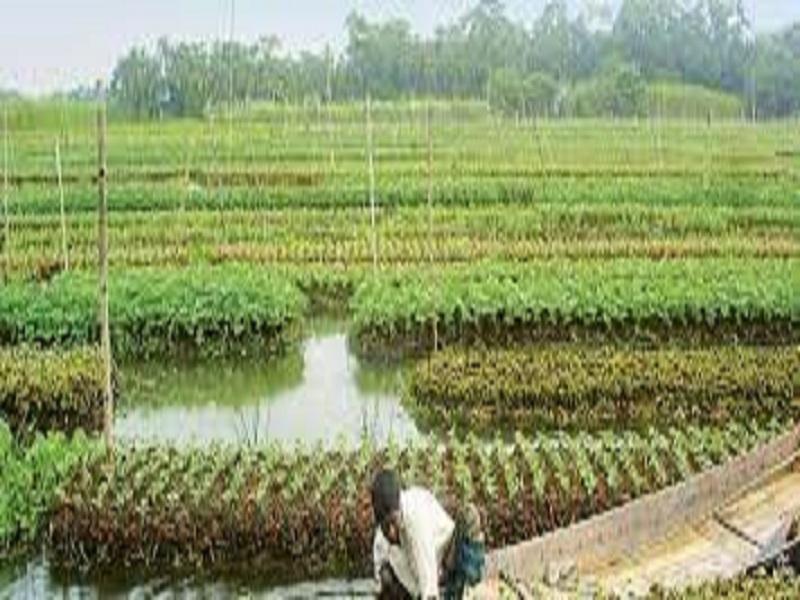 Successful-farmer (image credit- Google)