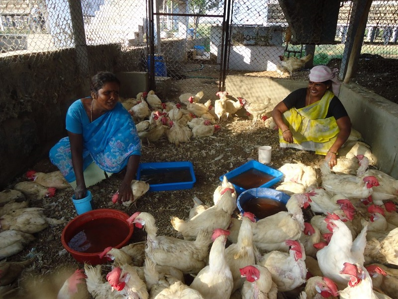 Poultry farm (image credit- Google)