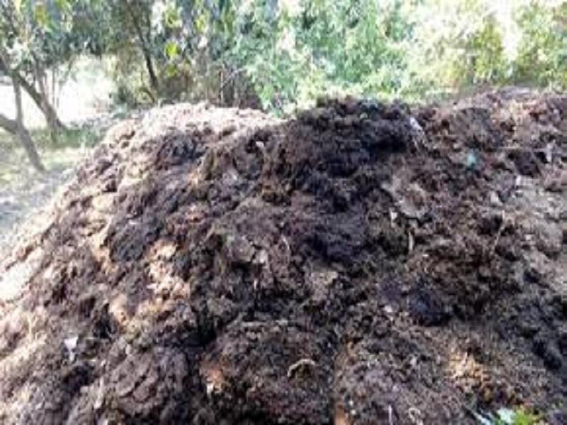 Compost Fertilizer (image credit- Google)