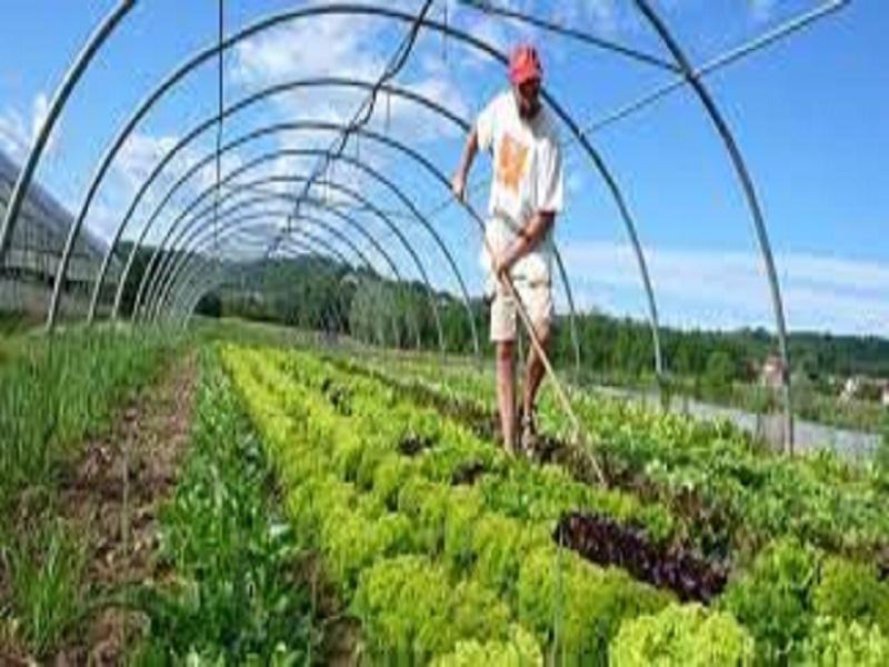 Organic fertilizer (image credit- Google)