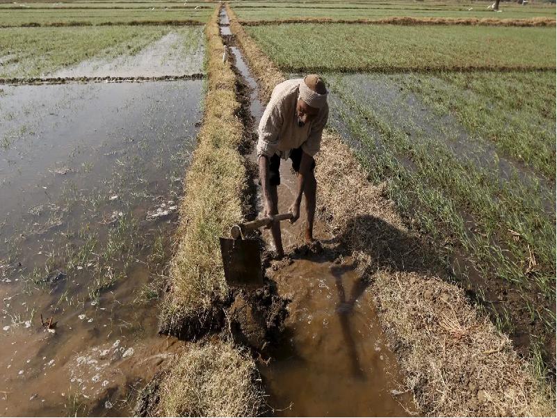 Dry land (Image Credit - Google)