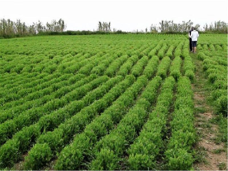 Fallow Land Farming (Image Credit - Google)