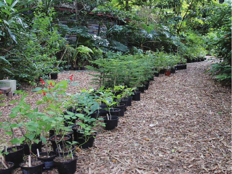 Plant Business (Image Credit - Google)