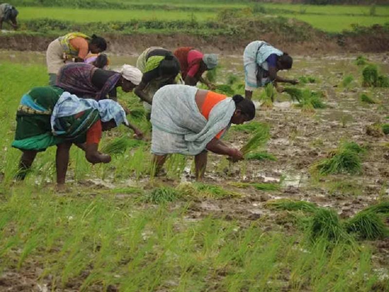 Soil-less farming (image credit- Google)