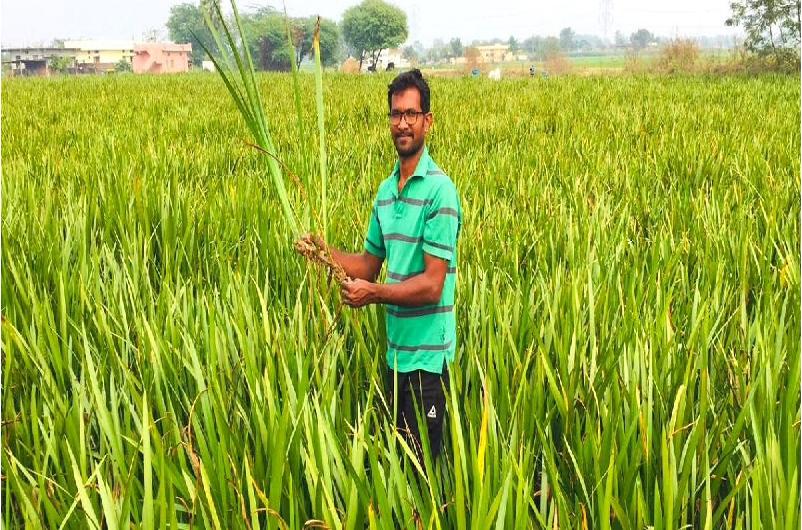 Low cost farming (Image Credit - Google)