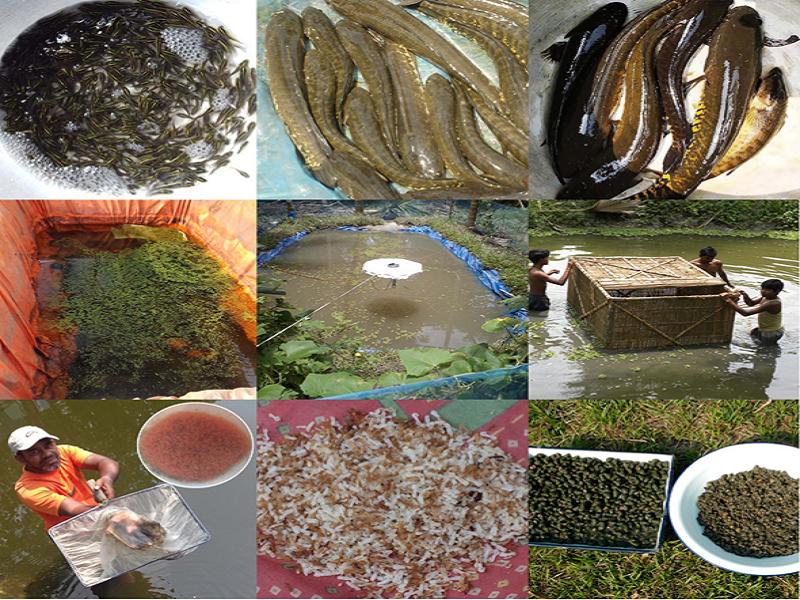 Shoal Fish (Image Credit - Google)