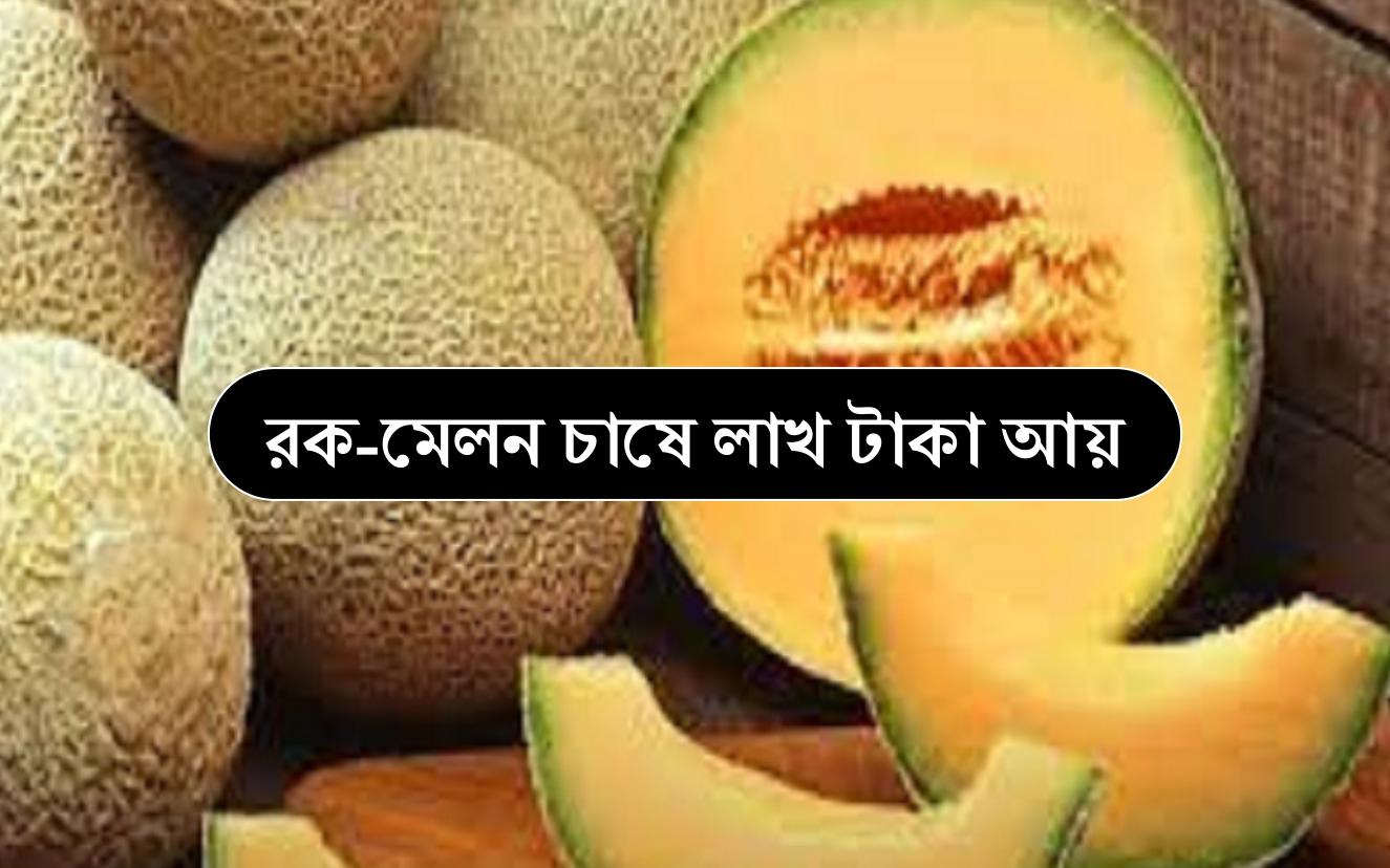 Rock Melon Farming: রক-মেলন চাষে ব্যাপক সাফল্য কৃষকের