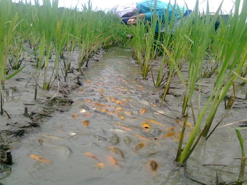 Integrated Farming (Image Credit - Google)