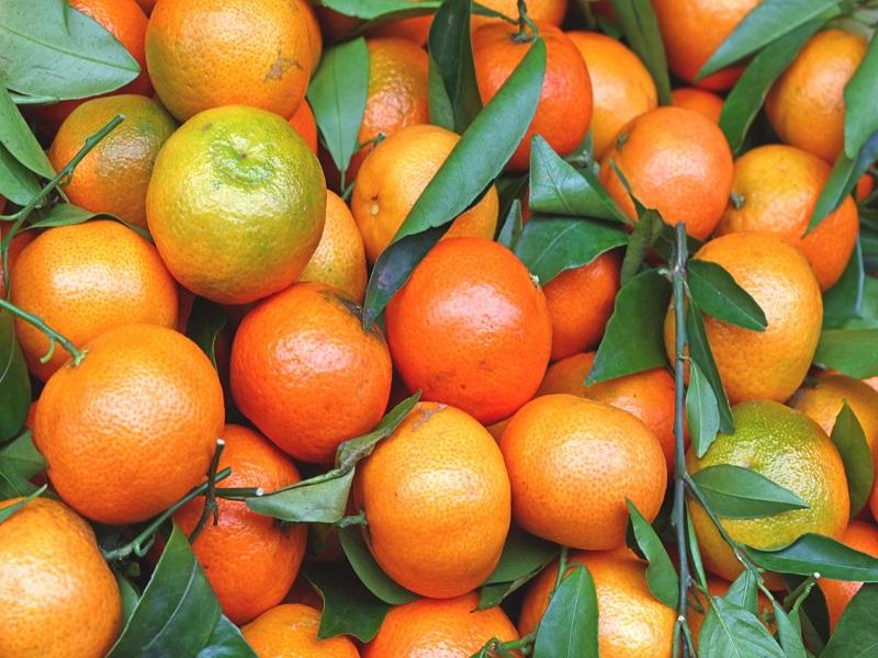 Mandarin farming (image credit- Google)