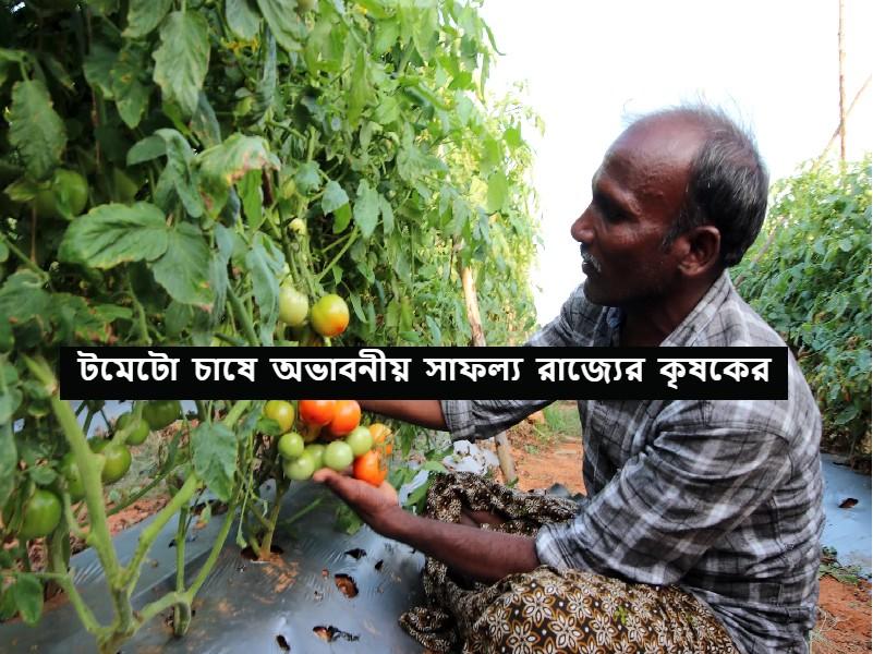 Success Story – টমেটো চাষ করে সফল পশ্চিমবঙ্গের কৃষক শঙ্কর বেড়া