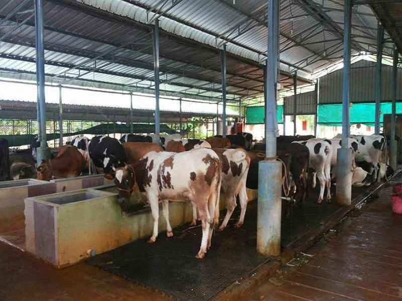 Dairy Farm (image credit- Google)